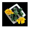 FL-cactus-1
