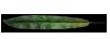 FL-leaf-1