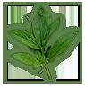 peony-leaves-1