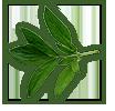 peony-leaves-2